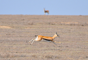 alignment-in-business-gazelle